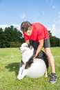 Dog stretching over yoga ball trainer helping his stretch out his joints on a promotes good balance and health for dogs Stock Photos