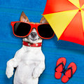 Dog summer beach lying on towel under shade of umbrella relaxing and chilling out in the vacation Stock Photography