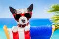 Dog summer holiday vacation Royalty Free Stock Photo