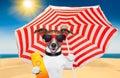 Dog summer sunscreen Royalty Free Stock Photo