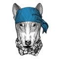 DOG for t-shirt design Wild animal wearing bandana or kerchief or bandanna Image for Pirate Seaman Sailor Biker