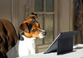 Dog with tablet Royalty Free Stock Photo