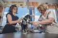 Dog tailor measurment Royalty Free Stock Photo