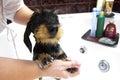 Image : Dog taking a bath looking  boy