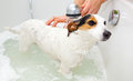 Dog taking a bath in a bathtub Royalty Free Stock Photo