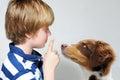 Dog teaching boy an australian shepherd puppy Stock Image
