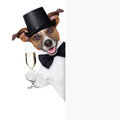 Dog toasting with champagne glass behind a white placard Royalty Free Stock Image