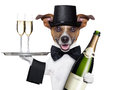 Dog toasting new years eve with champagne and service tray Royalty Free Stock Photography