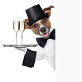 Dog toasting with service tray behind a white placard Royalty Free Stock Image