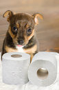 Dog toilet Stock Photo