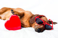 Dog with toy heart Royalty Free Stock Photography