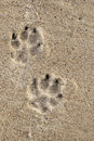 Dog tracks Stock Images