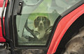 Dog in a tractor (Spaniel) Royalty Free Stock Image