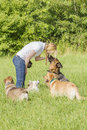 Dog trainer obedience