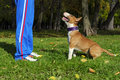 Dog training process Royalty Free Stock Photo