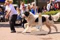 Dog training show Royalty Free Stock Photo