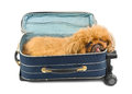Dog in travel case on white background Stock Images