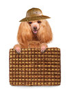 Dog traveler isolated on white Royalty Free Stock Image