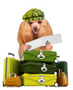 Dog traveler isolated on white Stock Image