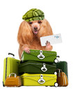 Dog traveler isolated on white Royalty Free Stock Photography