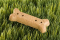 Dog treat in grass. Royalty Free Stock Image