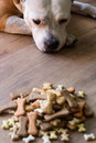 Dog with treats Royalty Free Stock Photo