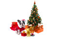 Dog under christmas tree with presents Royalty Free Stock Images