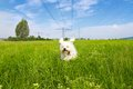Dog under tension runs on a green meadow and a slightly cloudy blue sky just a power line Stock Photo