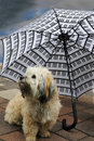 Dog under an umbrella Stock Photography