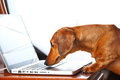 Dog using computer Royalty Free Stock Images