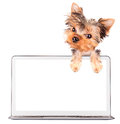 Dog using a computer laptop with empty screen Royalty Free Stock Photo