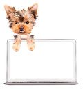 Dog using a computer laptop with empty screen Stock Image