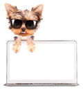 Dog using a computer laptop with empty screen Royalty Free Stock Photos