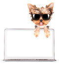 Dog using a computer laptop with empty screen Stock Photos