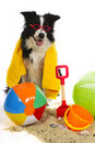 Dog on vacation Stock Images