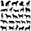 Dog vector Stock Photos
