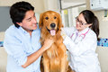 Dog vet his owner doctor Royalty Free Stock Photo