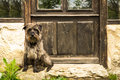 Dog waiting in the door outdoor shot of a sheetdog sitting front of a Stock Photography