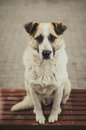 Dog waiting for a host sitting on the street bench and Stock Images