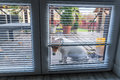 Dog waiting for open door Royalty Free Stock Photo