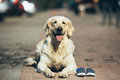 Dog waiting for the owner Royalty Free Stock Photo