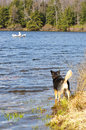 Dog waits excitedly for her human on shore Royalty Free Stock Photo