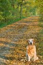 Dog on walk  in park Royalty Free Stock Photo