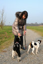 Dog walking Stock Photography