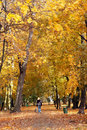 Dog walking in fall park Royalty Free Stock Photo