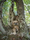 Dog walking through hole in tree trunk a shih tzu a the base of a Stock Photography