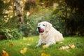 Perro camina en otoño