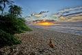 Dog watching the sunset Royalty Free Stock Photo