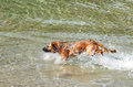 Dog in the water large playing sea Royalty Free Stock Images