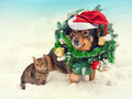 Dog wearing christmas wreath and santa hat with little kitten sitting outdoors in snow Royalty Free Stock Images